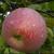 Яблоко Орлик