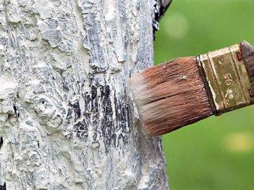 Белить дерево