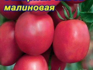 tomat_cliva