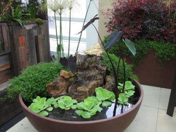 Условия выращивания растений в воде