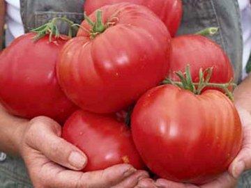 Крупноплодные томаты