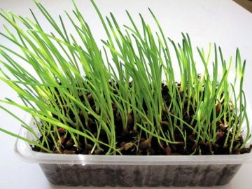 Выращивание лука в грунте