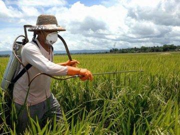 Меры предосторожности при использовании гербицидов