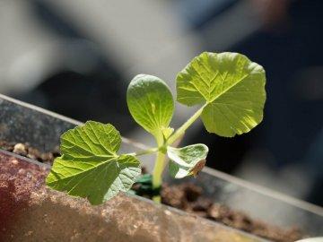 Возможные проблемы при выращивании в подвале