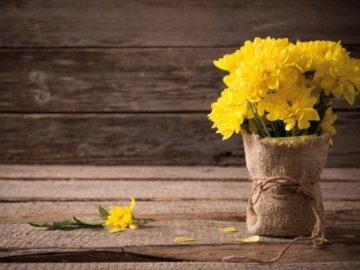 Можно ли засушить хризантемы на зиму?
