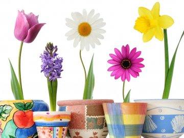 Основные положения по пересадке комнатных растений