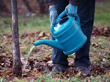 Полив и подкормка дерева