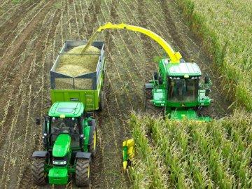 Сроки и правила сбора урожая кукурузы на силос