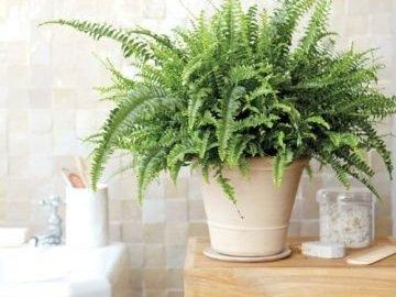 Возможные проблемы с растениями