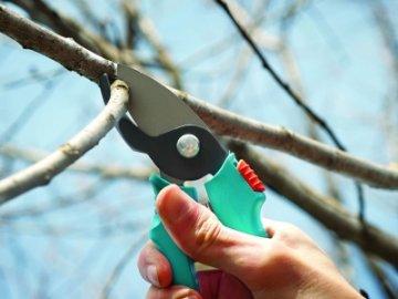 Зачем нужно обрезать и направлять ветки