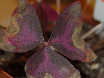 Заболевания и вредители растения: лечение и профилактика