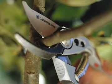 Правила и особенности весенней обрезки в саду