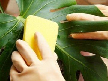 Вредители растения и борьба с ними