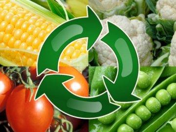 Правила севооборота – залог обильного урожая
