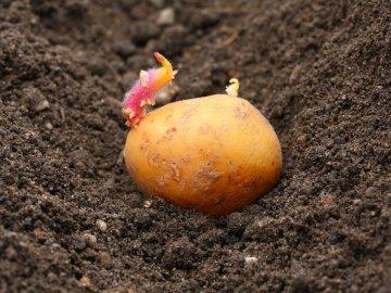 Выращивание в курганах