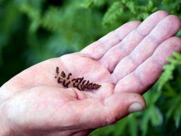 Методы размножения растения
