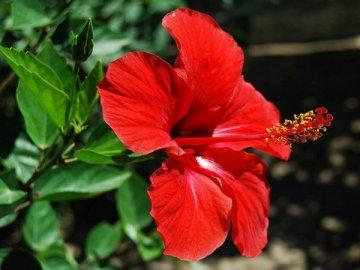 Как правильно ухаживать за растением