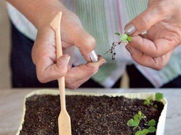 Советы по уходу за рассадой клубники