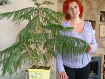 Основные правила ухода за вечнозеленым растением