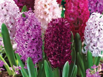 Лучшие сорта и виды цветка для выращивания