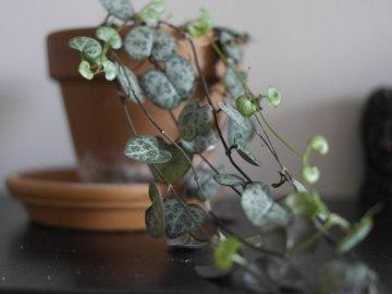 Внешние особенности растения
