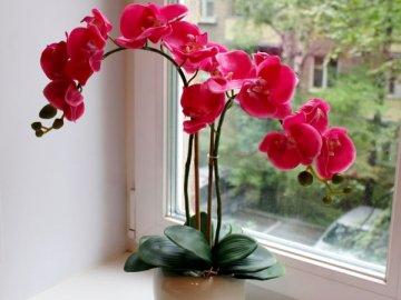 Как правильно ухаживать за цветами?