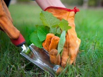 Профилактика появления сорняков на огороде