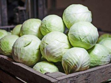 Сбор урожая и способы хранения капусты