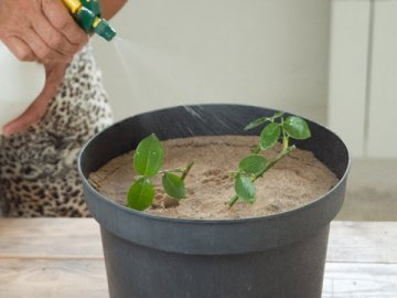 Ошибки при выращивании