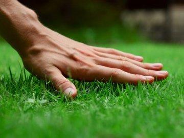 Обработка газона