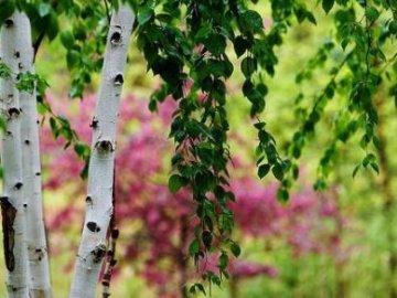Уход и пересадка дерева