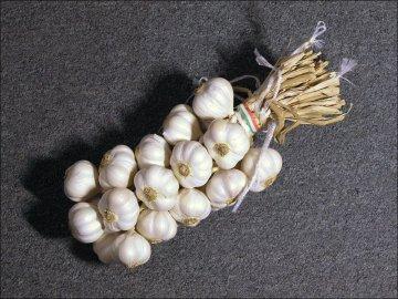 Сбор урожая и способы хранения чеснока