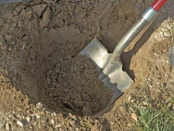 Посадка граната в саду