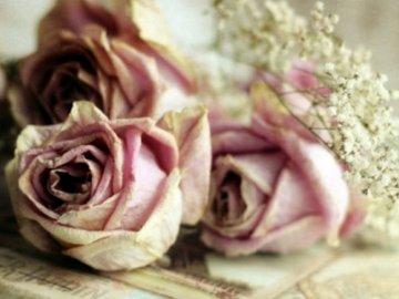 Можно ли засушить розу целиком?
