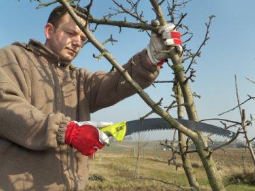 Способы формирования кроны дерева, проведение обрезки