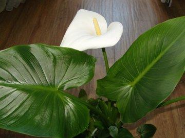 Как добиться цветения растения