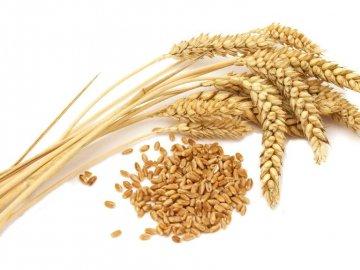 Подготовка семян и посев их – сроки, нормы, правила