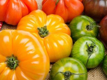 Разноцветные сорта помидор