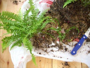 Все о пересадке растения