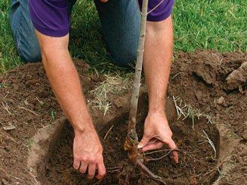 Высаживание деревьев и кустов