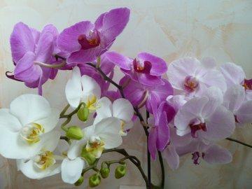 Советы цветоводу: как правильно ухаживать за орхидеями