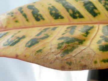 Вредители и болезни растения