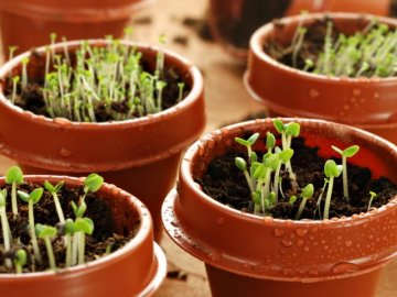 Уход за семенами после их прорастания