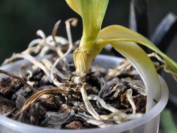 Что и кто может угрожать орхидеям