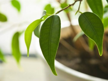 Чем может болеть растение и как его лечить