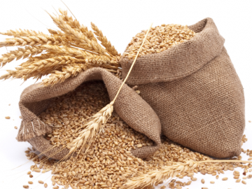 Сбор урожая, правила его хранения