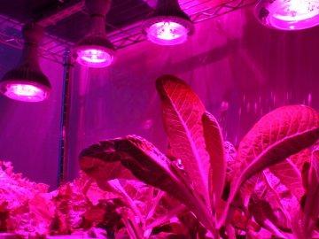 Советы садоводов по освещению рассады