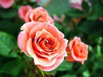 Создание условий для дальнейшего роста розы