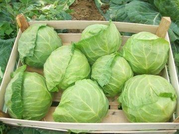 Сбор урожая и правила хранение