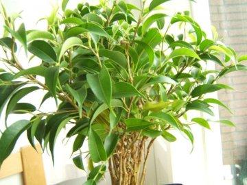 Как избежать проблем при выращивании